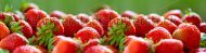 stock-photo-panorama-of-fresh-ripe-perfect-strawberry-food-frame-background-104381474