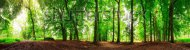 stock-photo-beautiful-degree-panorama-in-the-forest-in-spring-in-the-netherlands-162848087