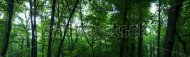 stock-photo-huge-forest-panorama-big-picture-of-trees-148478348