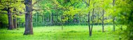 stock-photo-panorama-of-a-mixed-forest-with-oak-in-spring-sunny-day-87141706