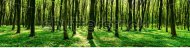 stock-photo-panorama-of-spring-forest-138471119