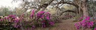 stock-photo-azalea-panorama-at-the-magnolia-plantation-in-charleston-sc-142843849 (1)