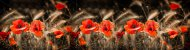 stock-photo-red-poppies-and-wheat-spikes-vintage-background-selective-focus-retro-style-postcard-145327585